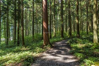 杉林2.jpg